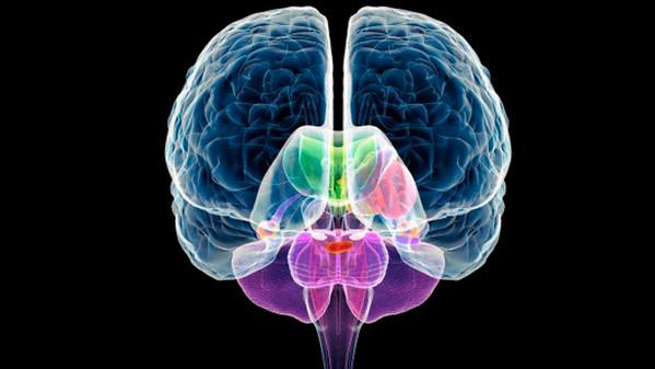 Obesità, ecco come sconfiggerla stimolando il cervello