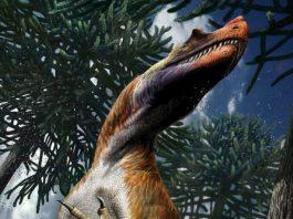 Il più antico dinosauro di grandi dimensioni era italiano