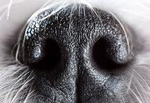 Tumori, i cani sono in grado di scovarli annusando il sangue