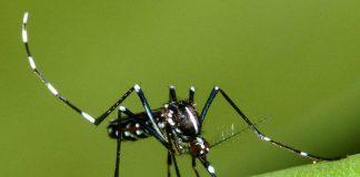 Zanzare, chi preferiscono pungere e il segreto per tenerle lontane