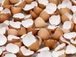 Rigenerazione ossea, il segreto della ricrescita è nei gusci d'uova