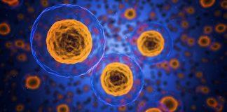 Xenobot, arrivano i primi robot viventi realizzati da cellule staminali