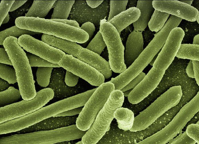 Infarto, scoperto il ruolo di un batterio intestinale