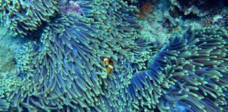 Cerotti smart, ecco come si potranno curare le ferite dei coralli